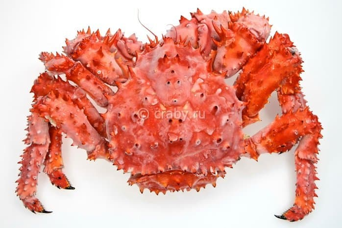 Cooked-frozen Spiny Crab