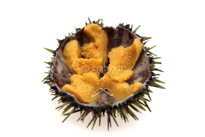 Green sea urchin roe