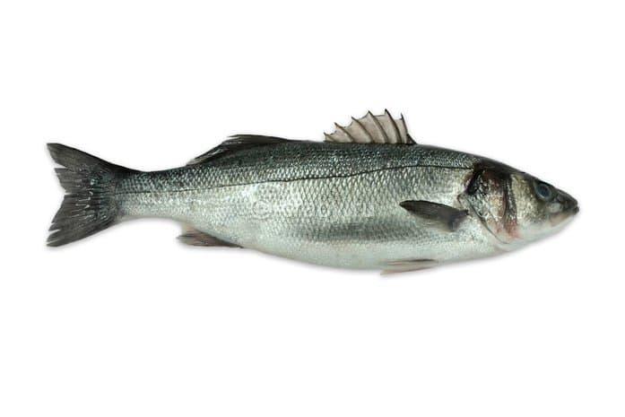 Рыба «Сибас» (лаврак, морской волк) - полезные свойства и ...
