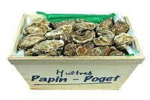 Oysters «Perl Blanche» Yves Papin