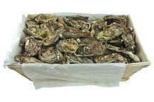 Oysters Speciale de Claire «Utha»