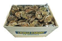 Oysters Speciale «Ecaille d'Argent»