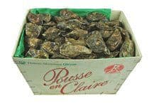 Oysters Speciale «Pousee en Claire»