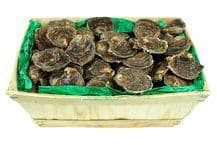 Oysters Pied de Cheval